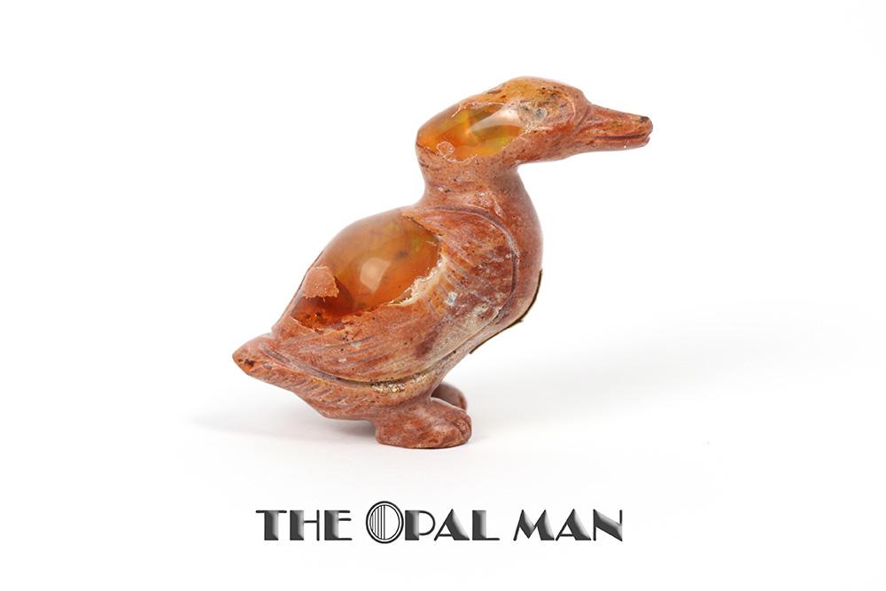 duck_0094